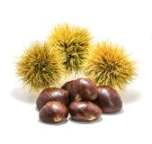 Mature Ricci chestnuts on isolated white background royalty free stock photo