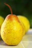 Mature rocha pear. Royalty Free Stock Photography