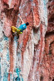 Mature Rock Climber ascending steep colorful rocky Wall Lead Climbing Stock Photography