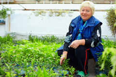 Mature smiling woman working in greenhouse. With citrus plants Royalty Free Stock Images