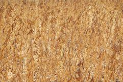 Mature soybeans Royalty Free Stock Photos