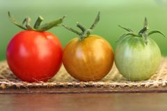 Mature stages. Closeup of three tomatoes with a different ripe on a wooden underground Royalty Free Stock Photo
