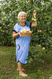 Mature Summer Resident in the garden with apples Royalty Free Stock Image