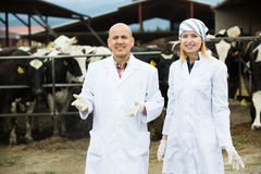 Mature vet and female assistent in cowhouse Royalty Free Stock Photos