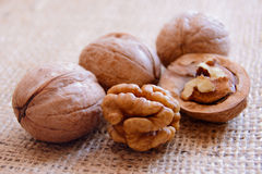 Mature walnuts on woven fabric Stock Images
