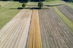 Mature wheat farmed fields aerial drone panorama royalty free stock photography