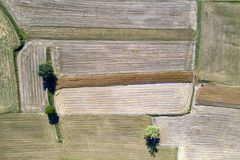 Mature wheat farmed fields aerial drone panorama royalty free stock image