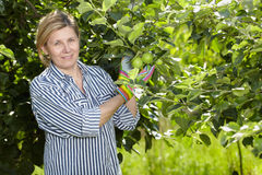Mature woman check apple trees in her orchard Stock Photo