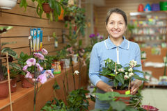 Mature woman chooses Clerodendrum plant Stock Images