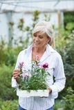 Mature Woman Choosing Plants At Garden Center Stock Photography