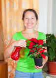 Mature woman with Christmas Star in flowering pot Stock Photo