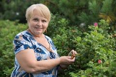 Mature woman collects dog-rose Stock Photos