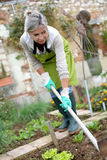Mature woman digging earth in garden Royalty Free Stock Images