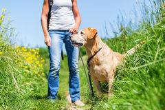 Mature woman with dog taking hiking in the country Royalty Free Stock Photo