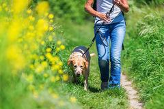 Mature woman with dog taking hiking in the country Stock Photos