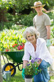 Mature woman engaged in gardening with man in background Stock Photography