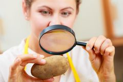 Woman inspecting potato with magnifying glass. Royalty Free Stock Photos