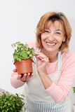 Mature woman florist Royalty Free Stock Photos