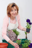 Mature woman florist Royalty Free Stock Photography
