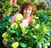 Mature woman in the garden cares for flowers Stock Photo
