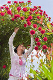 Mature woman in garden under red roses bower Stock Photo