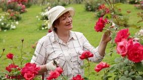 Mature woman gardener stock video
