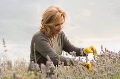 Mature Woman Gardening Royalty Free Stock Image