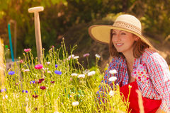 Mature woman gardening in her backyard Royalty Free Stock Images