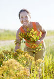 Mature woman gathers herbs. At wild meadow stock photos