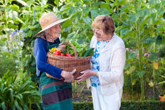 Mature Woman Helping a Senior Gardener with Basket Stock Photo