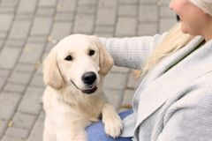 Mature woman with her dog. Outdoors Royalty Free Stock Images