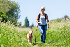 Mature woman hiking with dog in the landscape Stock Image