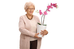 Mature woman holding an orchid flower in a pot Royalty Free Stock Photo