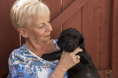 Mature woman holding a small black terrier puppy stock photography