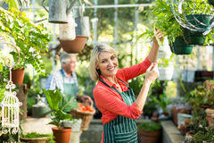 Mature woman inspecting potted plants at greenhouse Stock Images