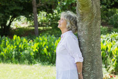 Mature woman leaning against tree trunk in park. Side view of a mature woman leaning against tree trunk in the park Stock Photo
