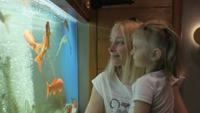 A woman with a little girl in her arms standing at a large aquarium with curiosity considering swimming fish. stock video footage