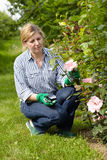 Mature woman look after her garden Royalty Free Stock Photography