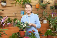 Mature woman looks Clerodendrum thomsoniae Royalty Free Stock Images