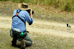 Mature woman photographing wildlife Stock Images