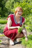 Mature woman  picking dill Royalty Free Stock Photo