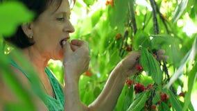 Mature woman picks and eats cherries. Mature woman picks and eats sweet cherries stock footage