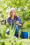 Mature woman planting lily in garden Stock Photos