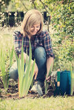 Mature woman planting lily in garden Stock Images