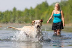 Mature woman plays with a labrador in the lake Stock Photo