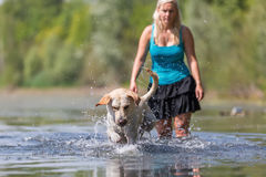 Mature woman plays with a labrador in the lake Stock Image