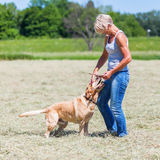 Mature woman plays with a labrador retriever Royalty Free Stock Photography