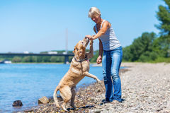 Mature woman plays with a labrador retriever Royalty Free Stock Images