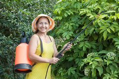 Mature woman spraying  plant Stock Photos