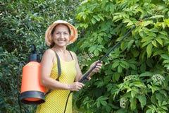 Mature woman spraying  plant Stock Photos